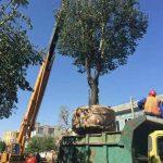 انتقال درختان