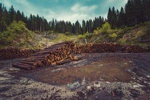 جنگلزدایی