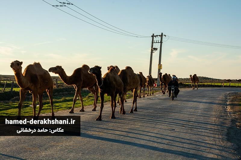 منطقهی بیابانی استان گلستان